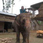 elephant volunteer